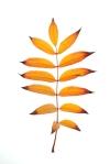 leaf_0001